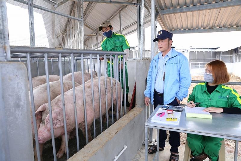 Bất thường giá lợn giảm sâu ngày cận tết làm cho các doanh nghiệp ghim hàng lo lắng