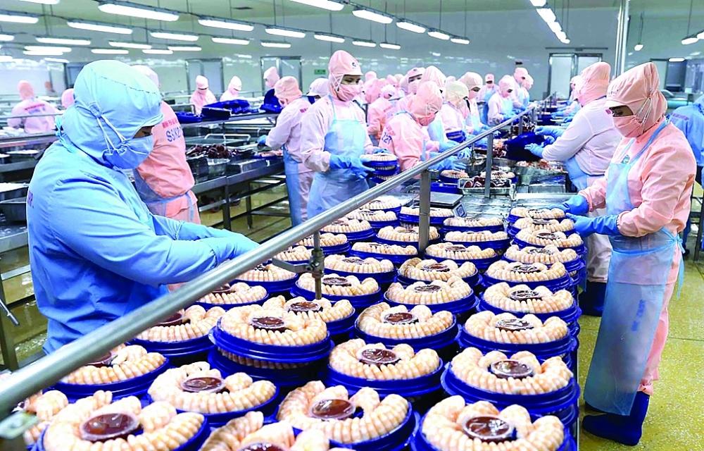 Xuất khẩu thuỷ sản khó phục hồi nhanh, Chế biến tôm xuất khẩu tại nhà máy của Tập đoàn Minh Phú Seafood Corp tại Khu công nghiệp Nam Sông Hậu (Hậu Giang). Ảnh: TTXVN