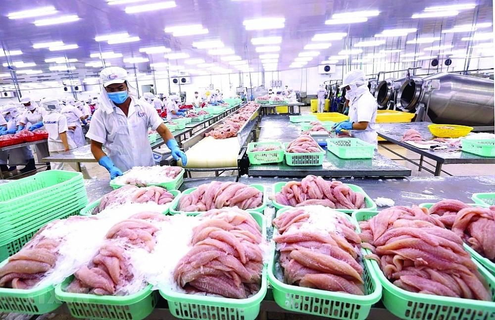 Sản xuất khó phục hồi, xuất khẩu thủy sản đang bị gián đoạn. Chế biến cá tra xuất khẩu tại Công ty Cổ phần xuất nhập khẩu thủy sản Cần Thơ. Ảnh: TTXVN