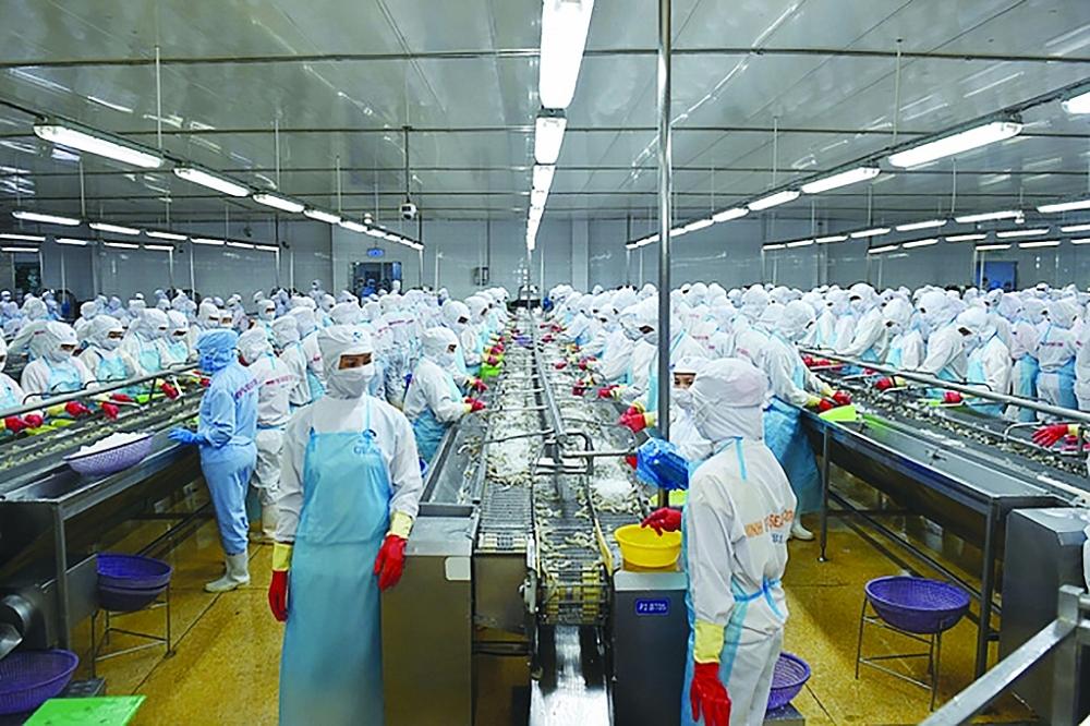 Doanh nghiệp thủy sản tăng chế biến sâu để xuất khẩu, chế biến tôm xuất khẩu tại Công ty CP Tập đoàn thủy sản Minh Phú. Ảnh: Q.Hiếu