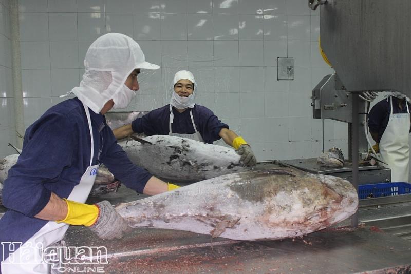DN chế biến thủy sản Việt Nam luôn đảm bảo nguồn gốc nguyên liệu tránh thẻ vàng thủy sản. Ảnh: T.H