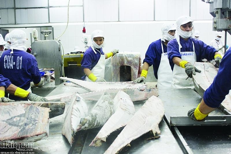 Xuất khẩu cá ngừ tăng cao tại hàng loạt thị trường, các doanh nghiệp tăng cường sản xuất.