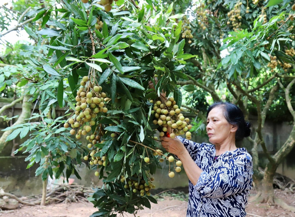 Mỹ là thị trường nhập khẩu đầy tiềm năng đối với trái cây Việt Nam. Ảnh: Nguyễn Thanh
