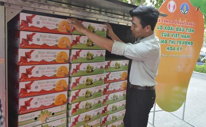 Xoài Việt Nam cung cấp cho thị trường Mỹ 1.352 tấn các loại, tăng 87,4% so với cùng kỳ 2019