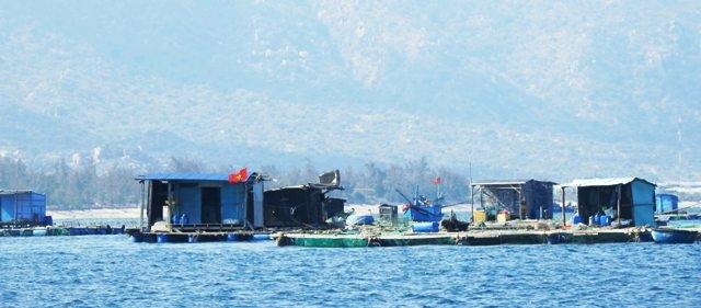 Nghề nuôi tôm hùm lồng bè tại huyện Ninh Hải ngày càng phát triển mạnh vì tôm ít bị bệnh dịch