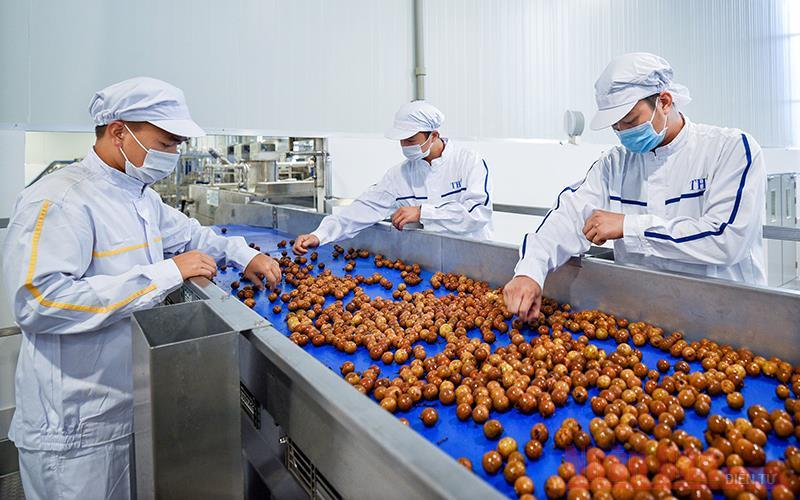 Tấp nập dự án , doanh nghiệp sản xuất chế biến rau quả xuất khẩu
