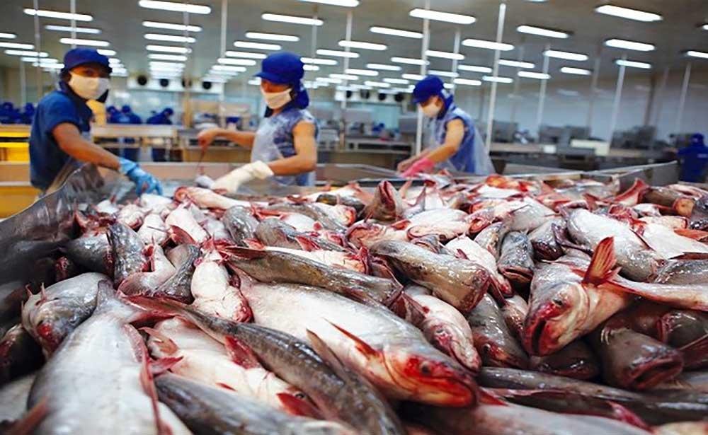 Các doanh nghiệp xuất khẩu cá tra nửa đầu năm 2021 đạt 788 triệu USD, tăng 18% so với cùng kỳ năm ngoái.